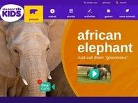 San Diego Zoo's African Elephant
